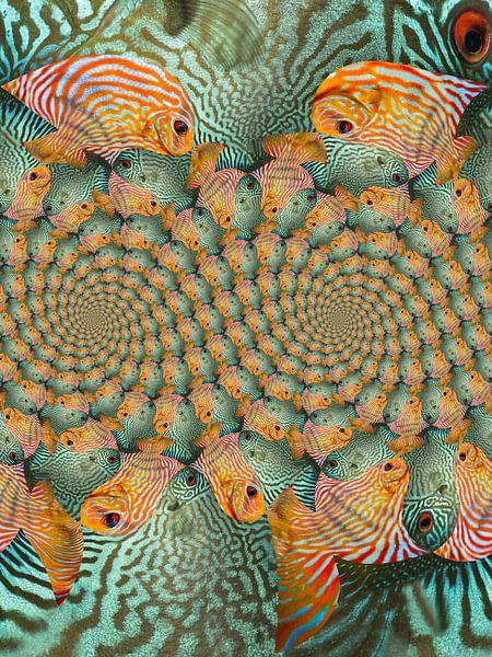 Double spirale de poissons tropicaux sur Tis Veugen