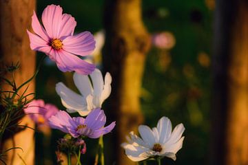Blumenreichtum von Saskia Schotanus