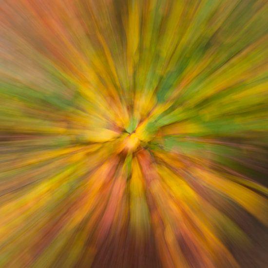 Artisieke herfstkleuren