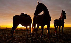 Horses van Anne Koop