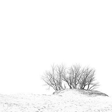 Gruppe von Bäumen in den Dünen