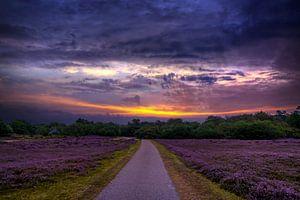 De uilenvangersweg van Peter Heins