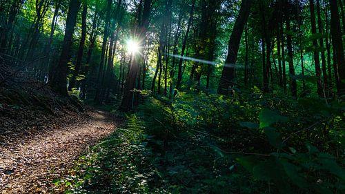 Zonsopkomst in het bos in Luxemburg