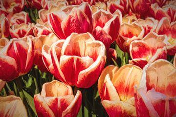 moderne abstracte rode tulpen van eric van der eijk