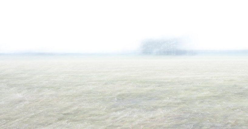 Mais stoppel landschap van Chantal van Dooren