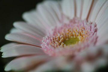 Blumen Teil 37 von Tania Perneel