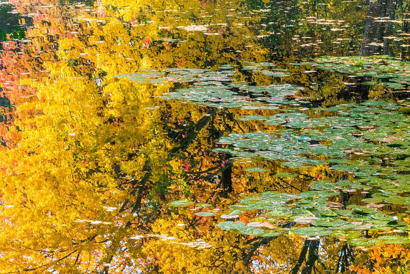 Herfst en water von Rob IJsselstein