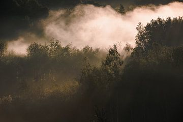 Kwintelooijen I van Sander Peters Fotografie
