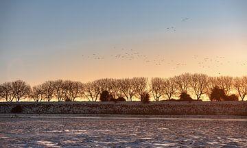 Fliegende Vögel bei Sonnenaufgang von Percy's fotografie