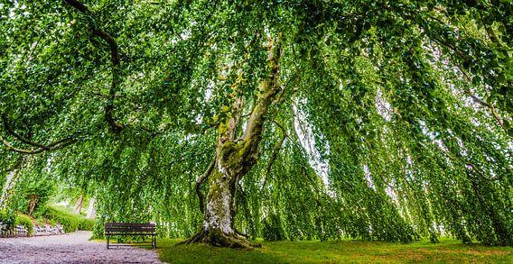 The lonely tree of Kronen Gaard - Noorwegen