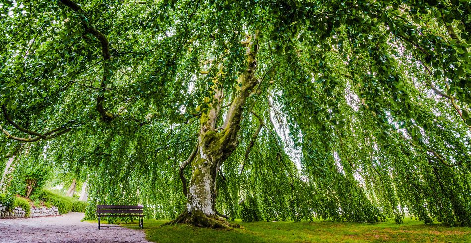 The lonely tree of Kronen Gaard - Noorwegen van Ricardo Bouman | Fotografie