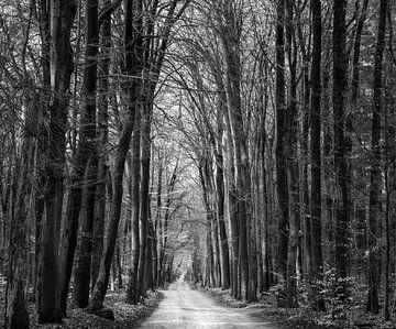 Bosweg von Hans Verduin