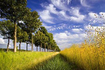 Zeeuws-Vlaams landschap van Linda van der Veeken