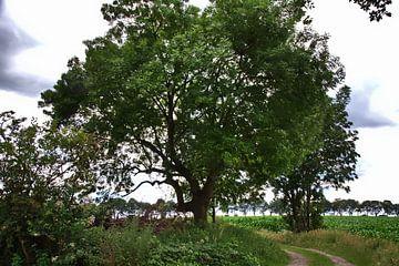 Bäume 2 von Edgar Schermaul