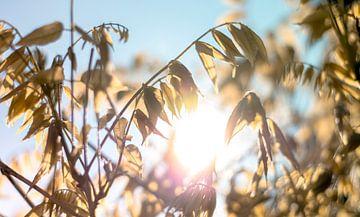 Hintergrundbeleuchtung Herbst von Niels Hemmeryckx