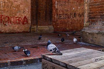 Tauben bei Santi Bartolomeo / Tauben bei Santi Bartolomeo von Klaske Kuperus
