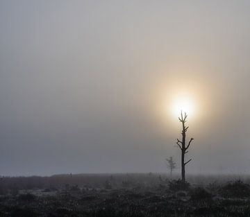 lichtgevende dode boom van Tania Perneel
