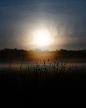 Wässriger Sonnenaufgang über nebligem Rasen von Laura-anne Grimbergen
