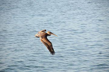 Pelikan über das Meer von Paul van Baardwijk