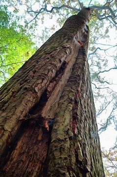 Tree von Tomas S.