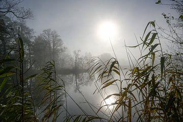Bleke zon met reflectie over een meer op een sombere bewolkte winterdag, riet op de voorgrond, bomen van Maren Winter