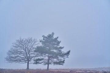 Bomen in de mist van Richard de Boorder