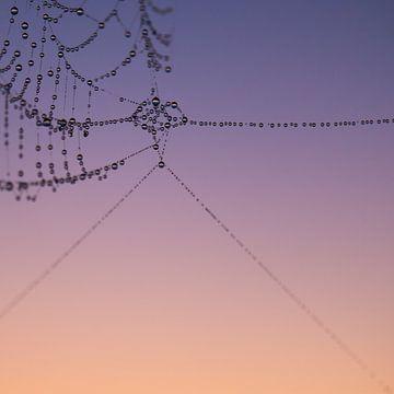 Spiderweb 1 sur
