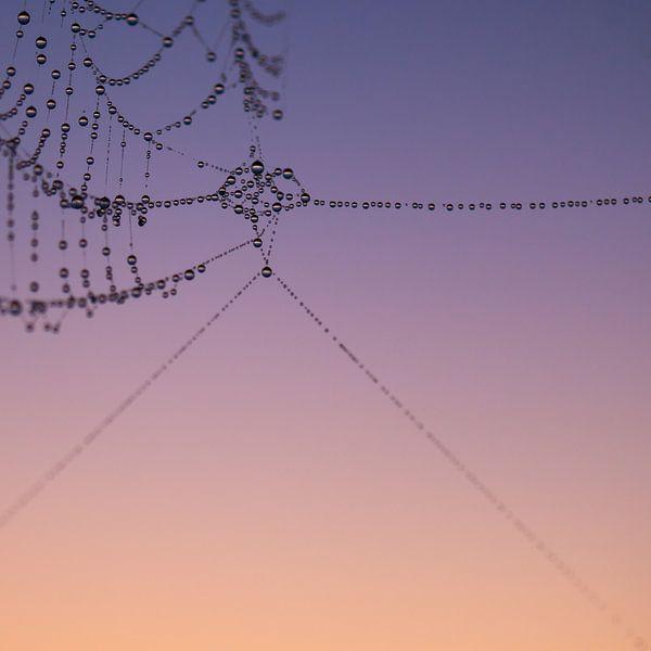 Spiderweb 1 van Desh amer
