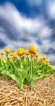 Gele Tulpen 2020 B van Alex Hiemstra