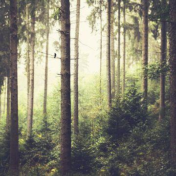 Morgenlied von Dirk Wüstenhagen