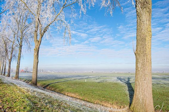 Winterlandschap in de IJsseldelta met berijpte bomen