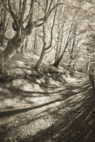 Sprookjesbos van Arja Schrijver Fotografie