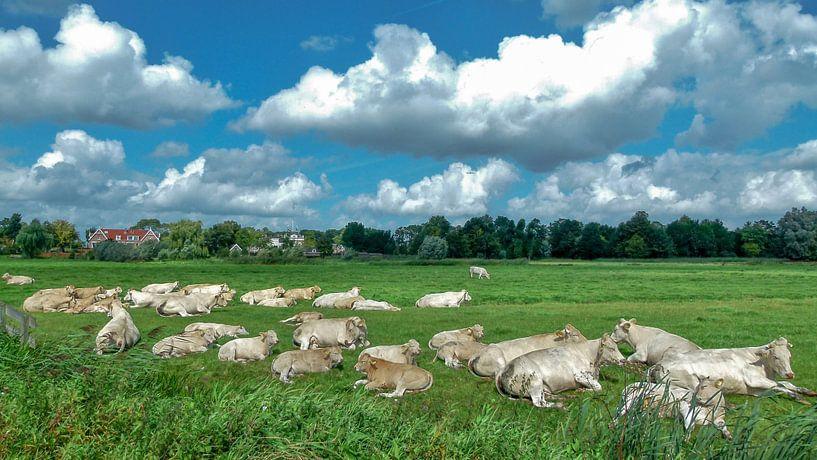 Koeien en meer koeien van Omri Raviv