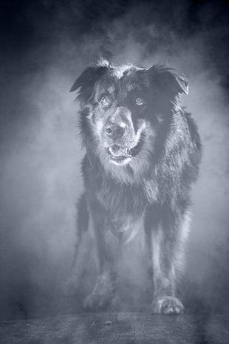 Dog in fog van Jana Behr