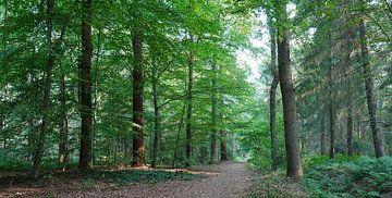 bospad door een gemengd bos van Wim vd Neut