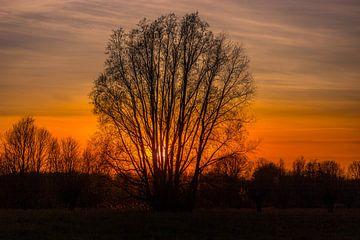 Sonnenuntergang hinter Baum von Johan van der Linde
