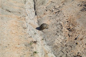 Schildkröte von Britney Suoss