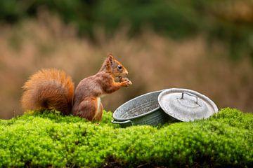 Eichhörnchen in der Nähe eines Zinntopfes von Caroline van der Vecht