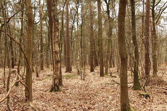 Het Bos van Yvonne Blokland