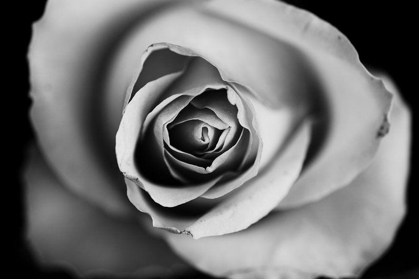 black and white van Kristof Ven