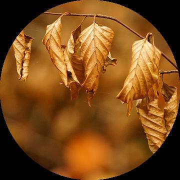 Gekrulde bladeren van Mark de Wit Fotografie