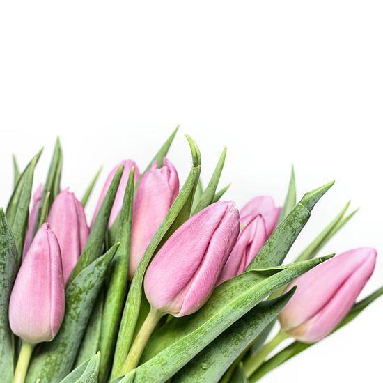 Tulips.... my first this year! (3) (Bloem, Tulp) van Bob Daalder
