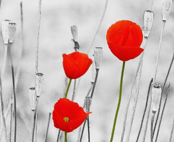 Poppy-Art