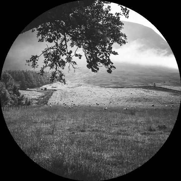 Schapen aan de voet van Ben Nevis sur Jasper van der Meij