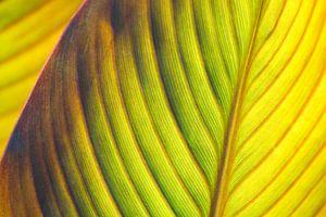Detail cannablad (abstracte natuur)