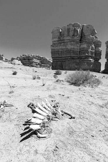 Skelet in de woestijn