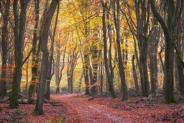 Herfstkleuren in het Speulderbos op de Veluwe van Cor de Hamer
