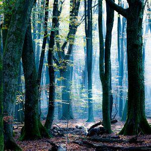 Der Blauwald von Simone Karis