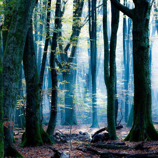 Der Blauwald