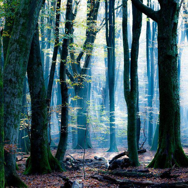Het Blauwe Bos van Simone Karis